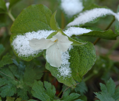 20100409-flower1