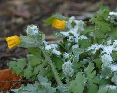20100409-flower4